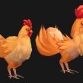chicken_01.jpg